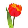 Векторный клипарт: красный тюльпан