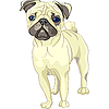 Sketch dog fawn pug breed | Stock Vector Graphics