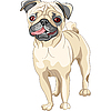 Vector clipart: dog fawn pug breed