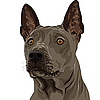Vector clipart: Ridgeback Dog breed