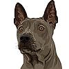 Векторный клипарт: Собака породы риджбек