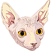Vector clipart: cat breed Sphynx