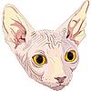 Кошка породы сфинкс | Векторный клипарт