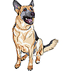 German shepherd dog breed | Stock Vector Graphics