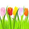Векторный клипарт: красочные тюльпанов в траве
