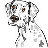 Vektor Cliparts: Skizze Hund Rasse Dalmatiner Portrait