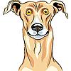 Vector clipart: Greyhound Dog breed