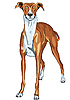 Vector clipart: Greyhound Dog breed