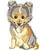 Векторный клипарт: щенок шелти