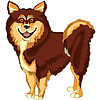 Dog lapphund breed | Stock Vector Graphics