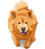 Vector clipart: color sketch of dog chow-chow breed