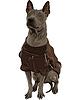 Vector clipart: Thai Ridgeback Dog breed sitting