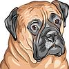 Векторный клипарт: собака породы бульмастиф