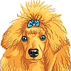 Vector clipart: color sketch of dog red Poodle breed