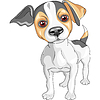 sketch dog Jack Russell Terrier breed