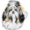 Векторный клипарт: Эскиз собаки породы ши-тцу