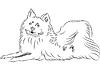 Vector clipart: sketch American Eskimo Dog breed lying