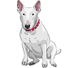 Bull Terrier Dog sitting
