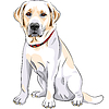 sketch yellow dog breed Labrador Retriever sitting