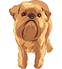 Vector clipart: sketch red dog Brussels Griffon breed