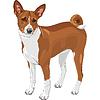 Векторный клипарт: Эскиз охотничья собака породы басенджи