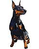 Vector clipart: dog serious Miniature Pinscher breed sitting