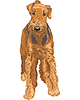 sketch dog Airedale Terrier breed