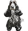 охотничья собака Английский кокер-спаниель сидя