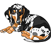 sketch dog Dachshund breed lying