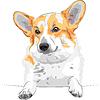 Vector clipart: sketch dog Pembroke Welsh corgi smiling