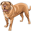 Vector clipart: dog breed French Mastiff