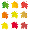 Vector clipart: Collection of colored maple leaves design