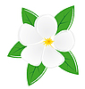 Vector clipart: Magnolia flower