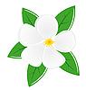 Векторный клипарт: цветок магнолии