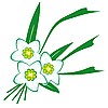 Vector clipart: Bouquet of white flowers
