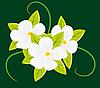 Векторный клипарт: Букет из белых цветов