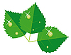 Vector clipart: Leaves with drops of dew