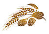 Vector clipart: Hops and wheat
