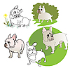 Vector clipart: French Bulldogs