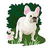 Weiße Französische Bulldogge im Garten