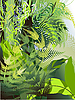 Vector clipart: Fern thickets in the jungle