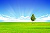 Drzewo na złożony | Stock Foto