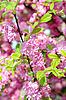 樱花 | 免版税照片