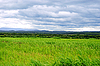Cloudy sky over green field | Stock Foto