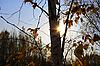 ID 3111273 | Autumn sun | Foto stockowe wysokiej rozdzielczości | KLIPARTO