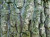 Texture of wood | Stock Foto