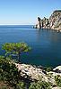 Black Sea. Pine tree next to the azure sea    Stock Foto