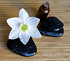 温泉黑石头的白色花 | 免版税照片