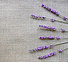 Photo 300 DPI: Lavender flowers on sackcloth background