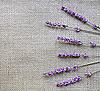 Фото 300 DPI: Лаванда цветы на фоне вретище